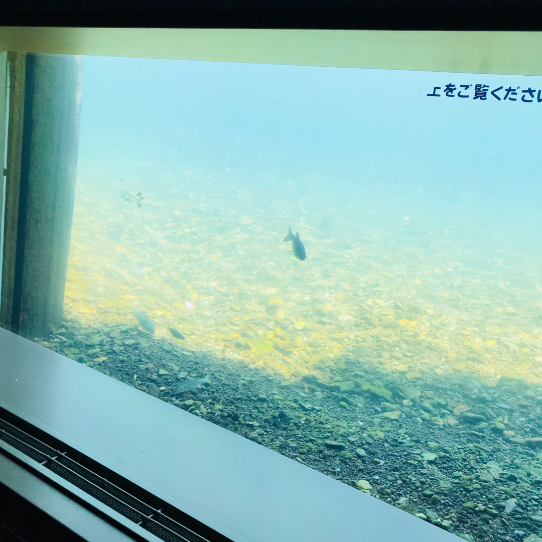 千歳川の中の様子。 サケのふるさと千歳水族館。 道の駅の隣にあるき...