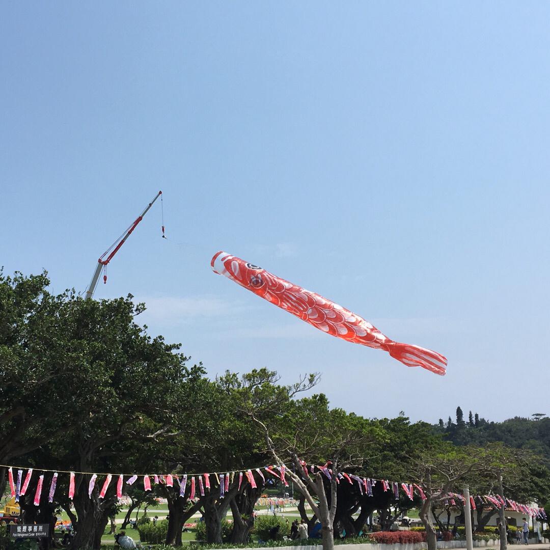 平和祈念公園では巨大な鯉のぼりが泳いでいます。30m超えです。5/...