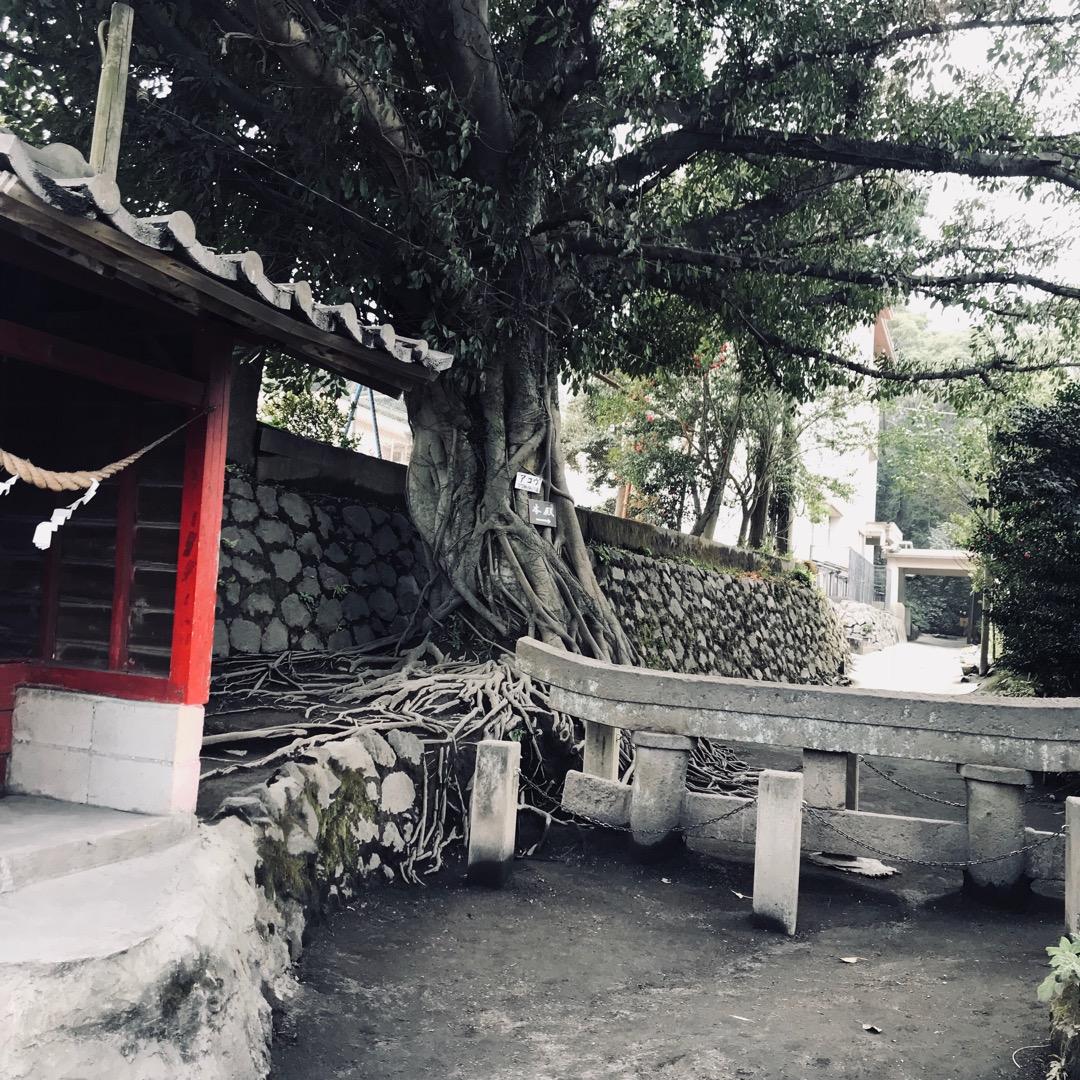 腹五社神社の黒神鳥居。 埋没鳥居と言う名称でとても有名な桜島の観光...