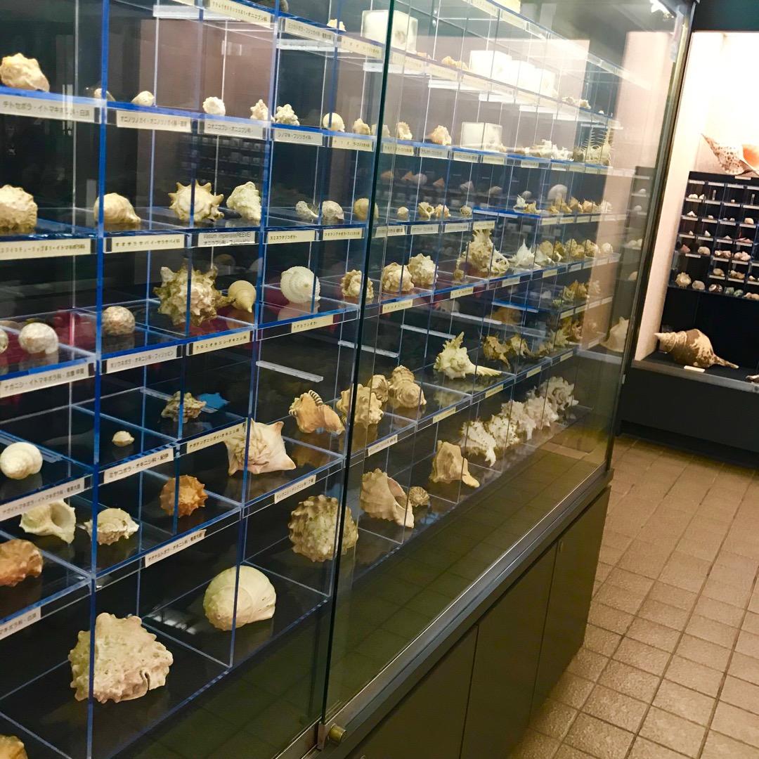 玉野海洋博物館。貝コレクション。 水族館の中に展示室があります。と...
