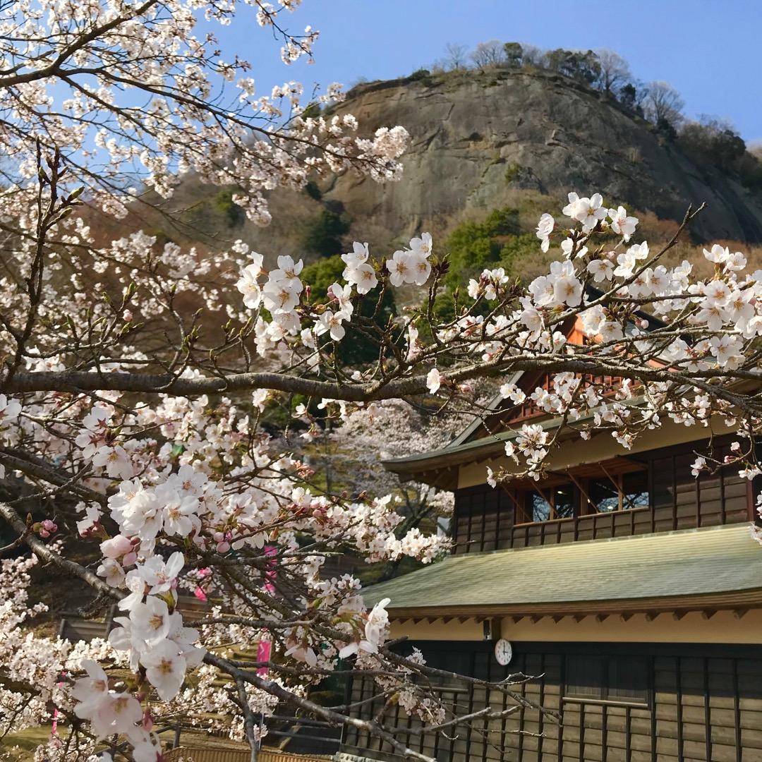 岩殿山の公園の桜。 登山口から登って行くと素敵な空間がありました!...