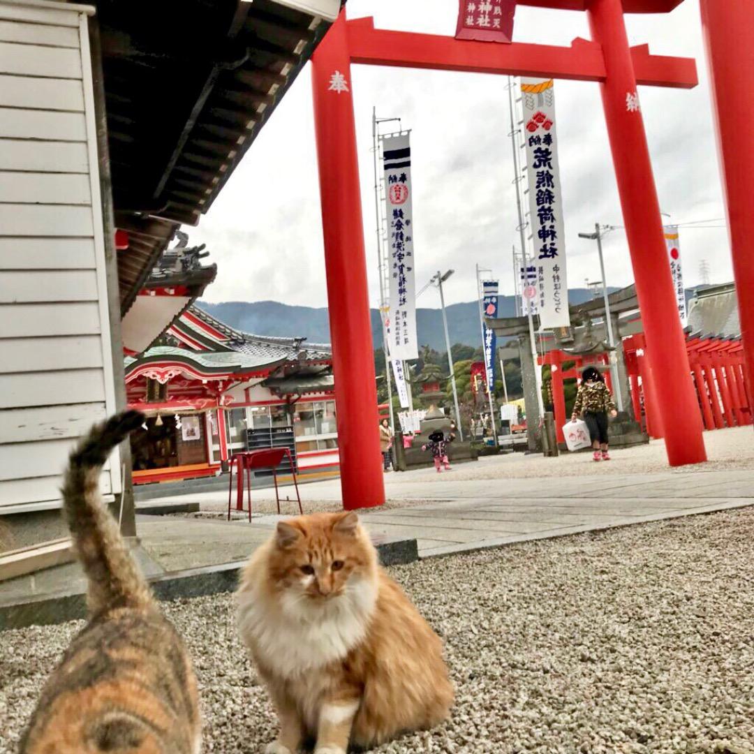 荒熊稲荷神社。神社を守る猫達。 稲荷神社、ではありますが猫達の存在...