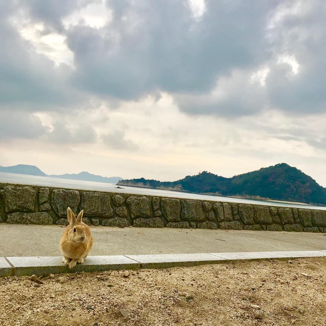 大久野島。風景とうさぎ。 うさぎ島と言われるほどですね!どこに行っ...