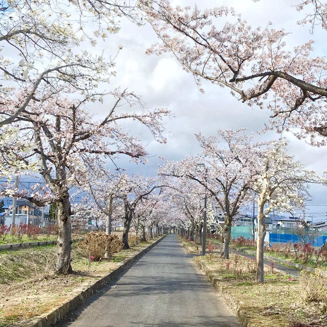 駅前の桜並木。 近くにまほろばの緑道というのどかなサイクリングロー...