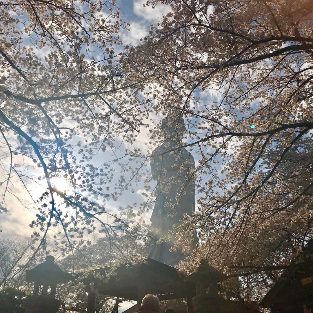 船岡城址公園! 観音様が逆光で神秘的になりましたw  #船岡 #桜まつり